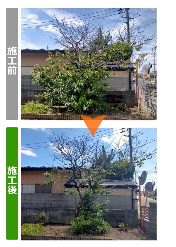 石巻便利屋フォーカスのご実家の庭手入れ事例(隣地との境界付近にある成長した植木の枝切り)
