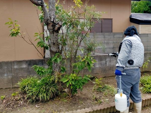 害虫駆除、害虫予防に噴霧器を使って庭木の消毒をしました