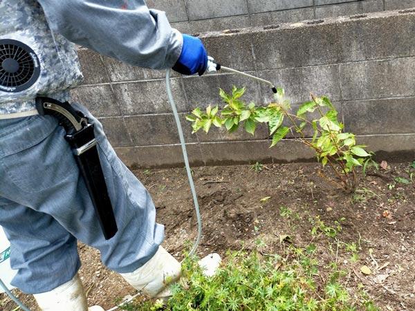 害虫駆除、害虫予防に噴霧器を使って庭木の消毒作業の様子
