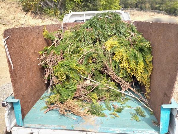 石巻便利屋フォーカスのお墓の植木剪定墓所の植木剪定した枝木回収